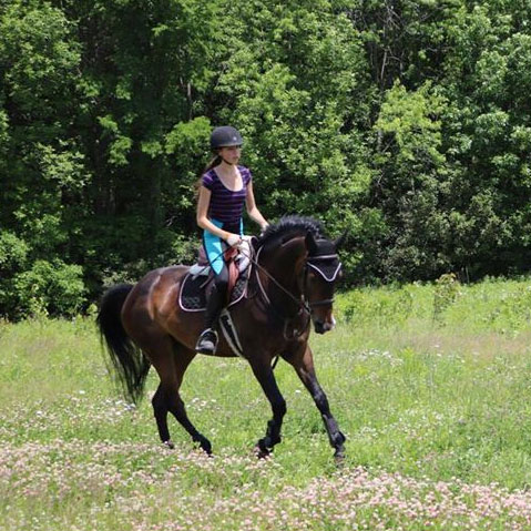 cheval-eden