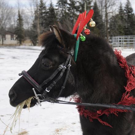 cheval-tweety-2